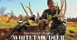 Best Places To Hunt Whitetail Deer