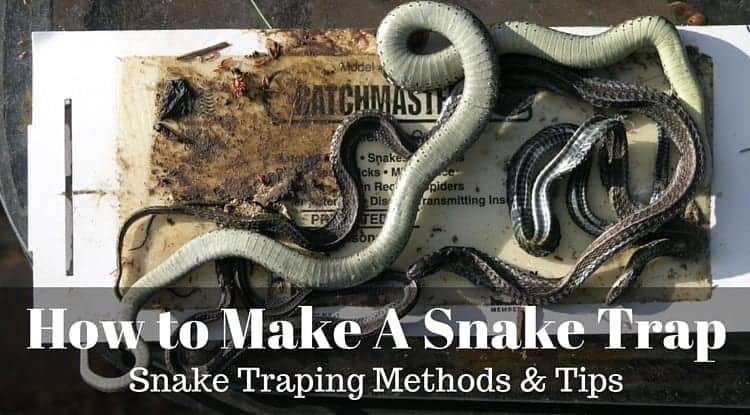 How To Make A Snake Trap Snake Trapping Methods And Tips