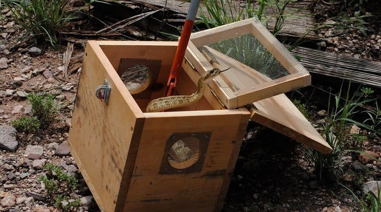 The wooden box snake trap