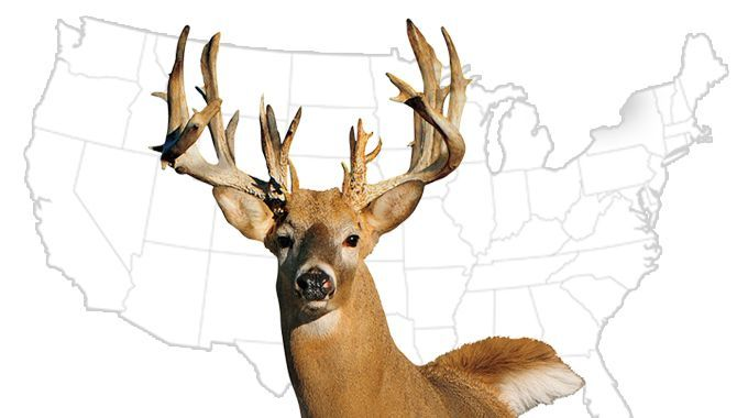 Where are the best places to hunt deer