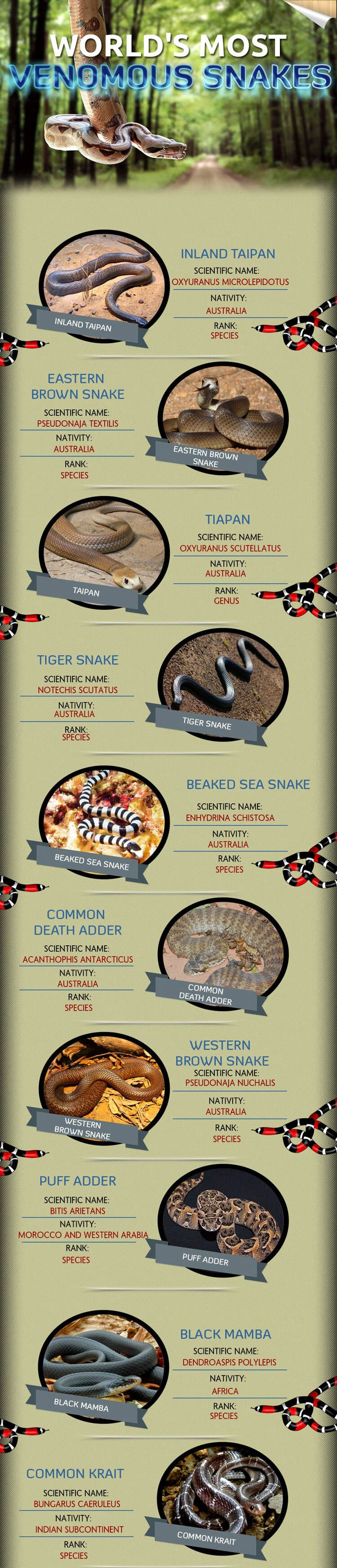 Top 10 Most Venomous Snakes in The World - The Survival Life