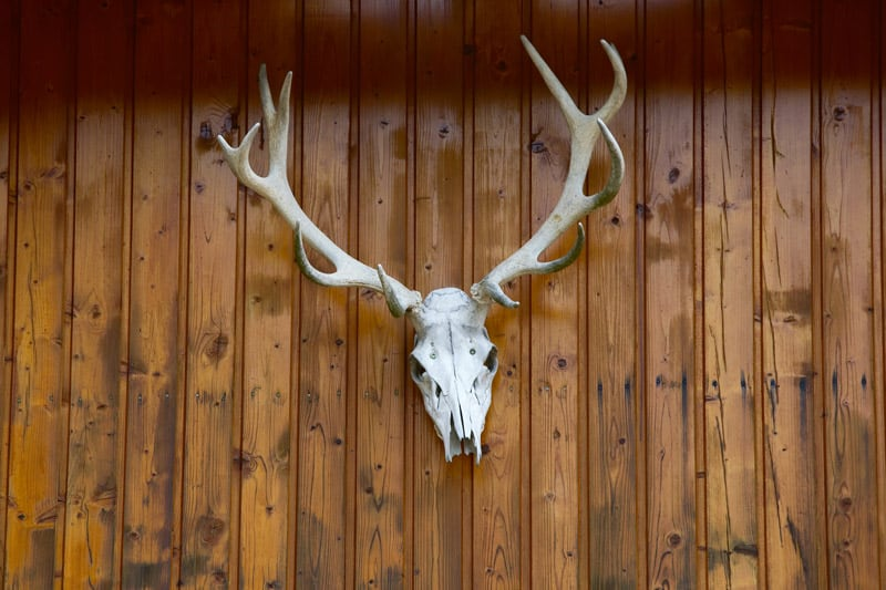 Deer skull on wall