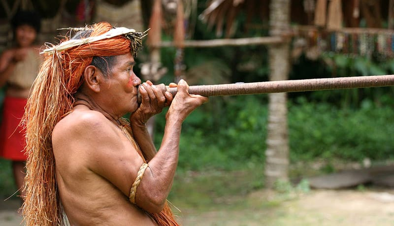 blowguns were used by traditional tribes