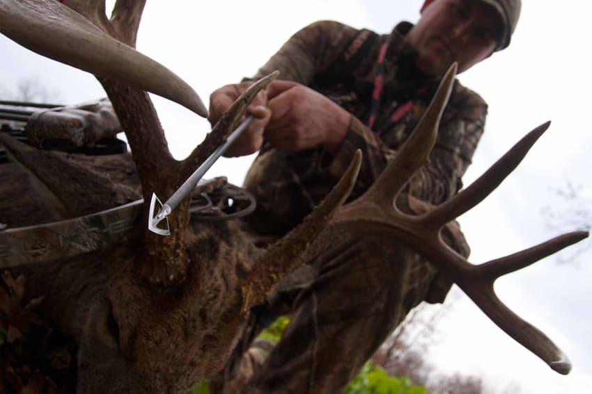 Best Broadheads for Deer