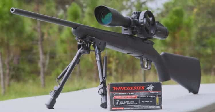 The 4 Best .17 HMR Rifle For Small And Accuracy Targets